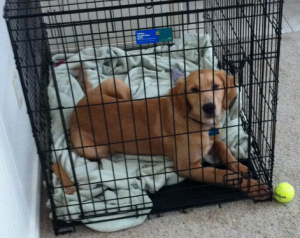 Enjoying his crate aside from the tennis ball teasing.